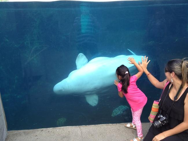 Mystic aquarium connecticut