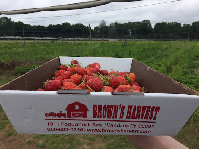 fresas en connecticut