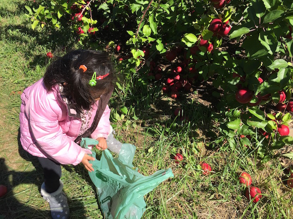 Recoger Manzanas Lyman Orchards Connecticut