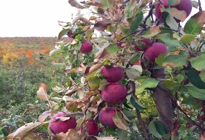 lugares para vivistar connecticut Manzanas-Connecticut