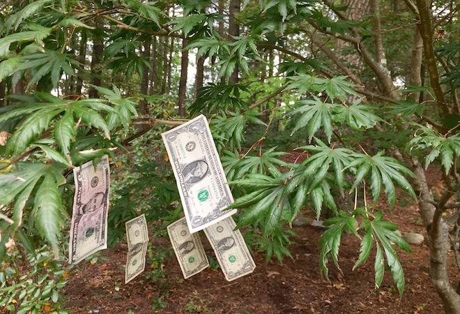 ¿Tú crees que el dinero crece en los árboles?