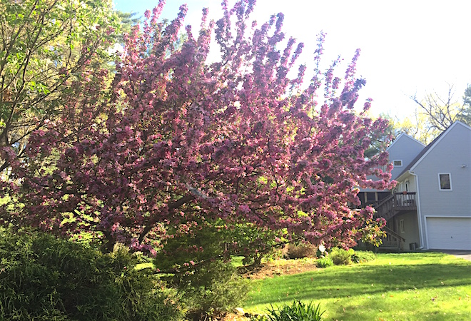 consejos para cuidar de tu jardin via VivirLatina Blog