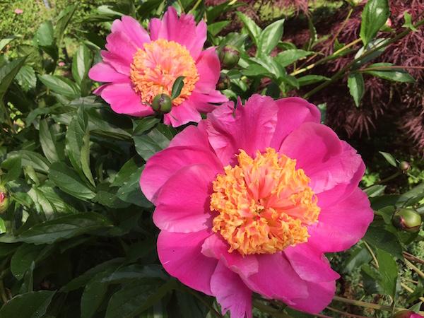cuidar tu jardin vivirlatina blog
