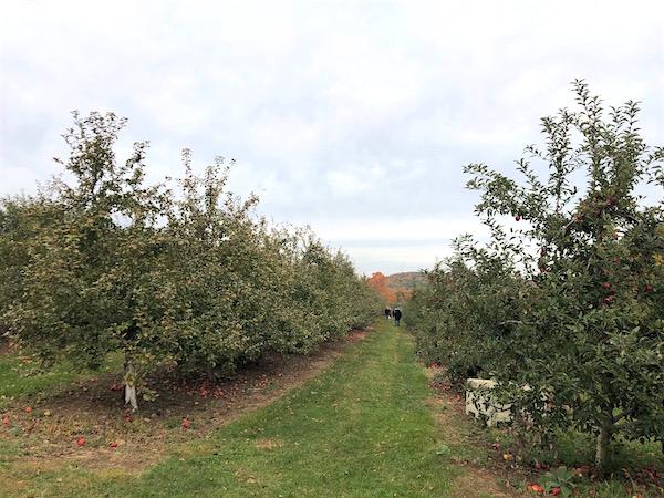 manzanas en connecticut